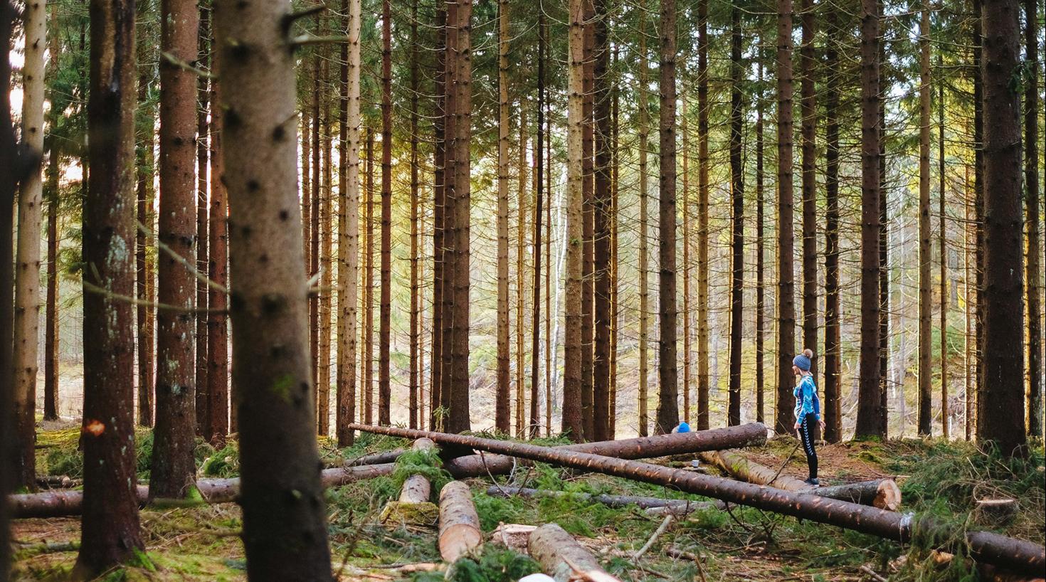 Dame i skog full av trær  CX-prosess